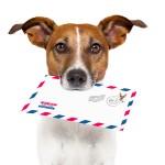bigstock-Mail-Dog-34566944